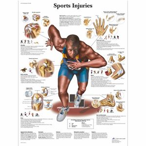 Anatomie Poster sportblessures